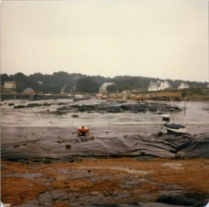 Trégastel marée noire (5)