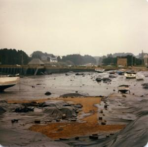 Trégastel marée noire (8)
